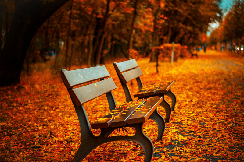 bench fall leaves - free autumn stock photo