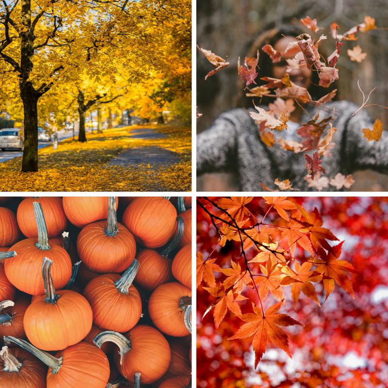 best free fall autumn stock photos