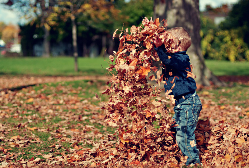 child playing in fall leaves - free autumn stock photo