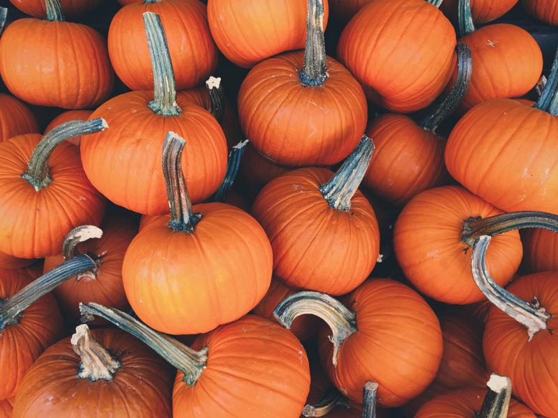 baby pumpkin pile - free fall autumn stock photo
