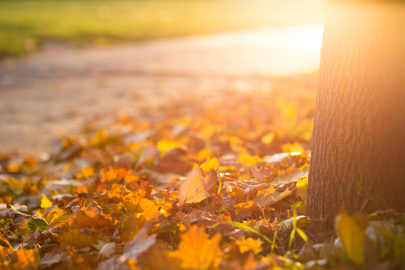 fall leaves and park tree - free autumn stock photo