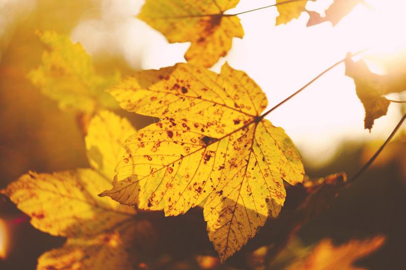 yellow fall leaves - free autumn stock photo