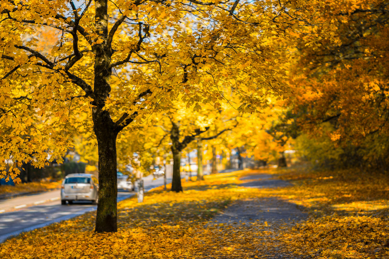 yellow fall leaves street - free autumn stock photo